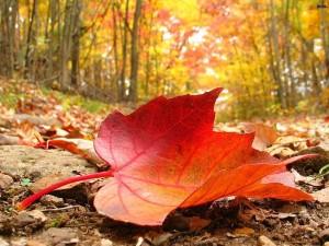 Otoño -Autumn - Herbst